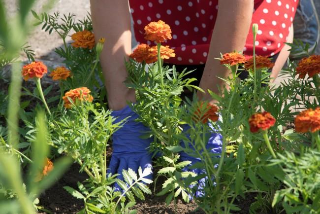 190624-Mi_kertünk_–_virágültetés-OA-MJ_36.jpg